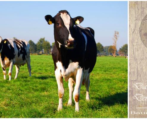 Landwirtschaft und ihr Bauernhof