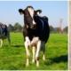 Gourmetfleisch.de Alternative - Lierferzeiten und Bestellung von Gourmetfleisch