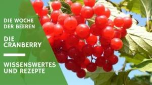 die cranberry oder cranberrysaft in der woche der beeren
