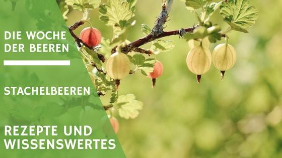 Stachelbeeren Rezepte