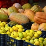 Großhandel Köln-Obst-online-bestellen