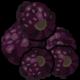 Obst-Brombeeren