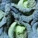 Grosshandel - Lebensmittel Online