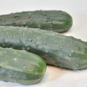Bio Landgurke