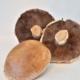 Bio Portabella Pilz